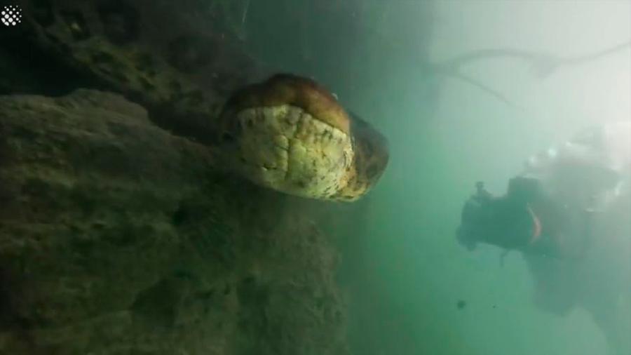 Dos buceadores se topan con una anaconda de siete metros en el fondo de un río