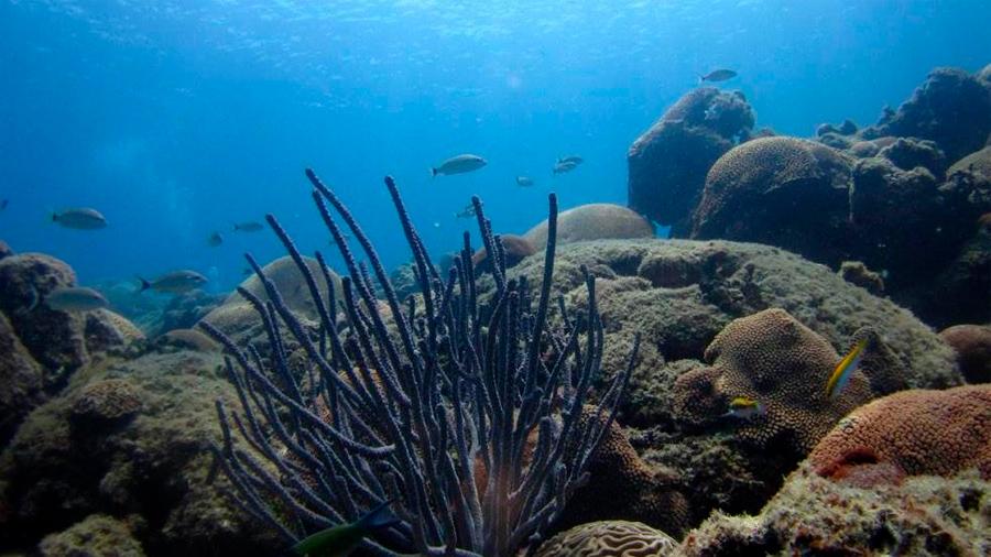 Descubren 12 nuevos arrecifes en Veracruz, Golfo de México