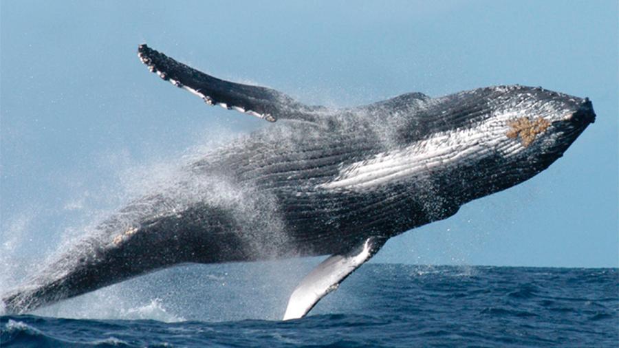 Un ecoturismo poco regulado afecta a las ballenas en los mares mexicanos