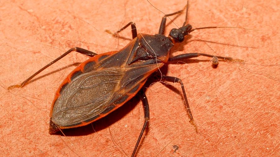 Investigadores mexicanos patentan un compuesto químico que combate el mal de Chagas
