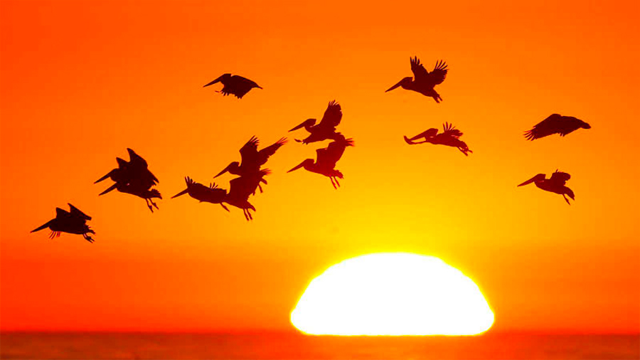 EU y Canadá han perdido un cuarto de sus pájaros en los últimos 50 años