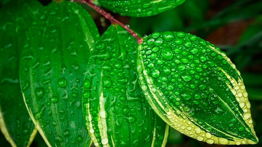 Una investigación descubre el proceso por el que las plantas se vuelven verdes