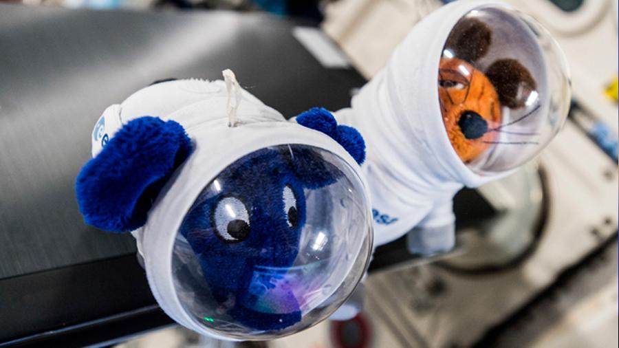 """""""Ratones espaciales"""" que regresaron a la Tierra pudieron tener cachorros sanos y sin problemas"""