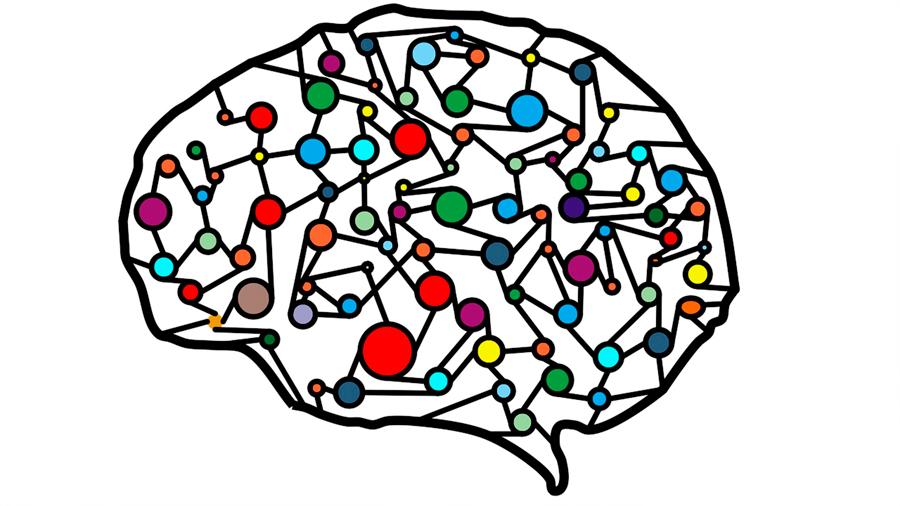 La duración de la vida depende de la actividad neuronal