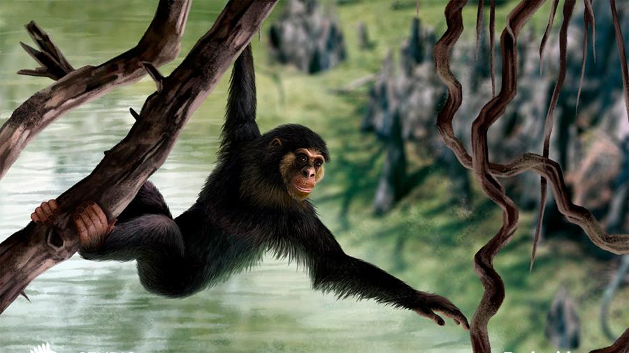 Descubren que el ser humano tuvo otro ancestro además de los simios
