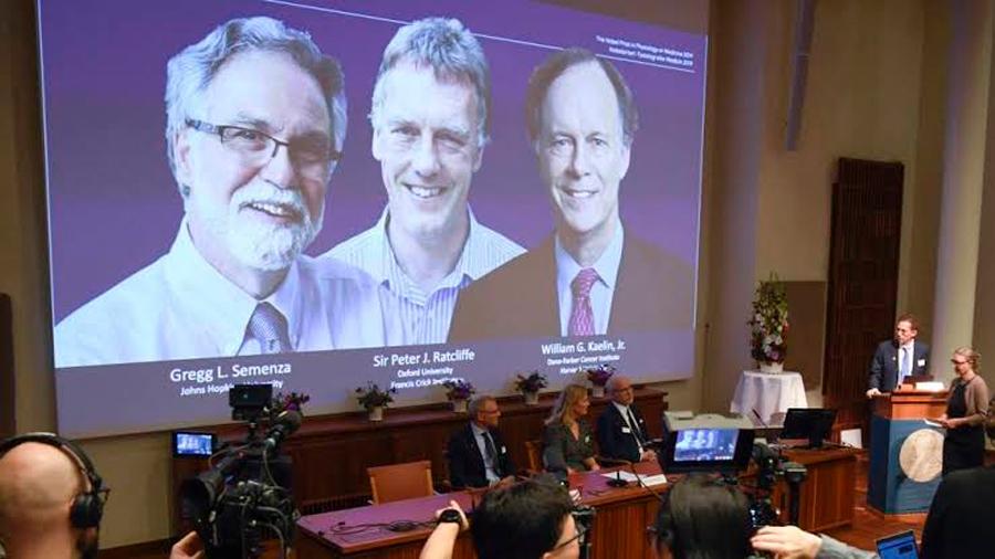 """Nobel de Medicina 2019 a tres científicos por descubrir """"cómo sienten las células y se adaptan al oxígeno disponible"""""""