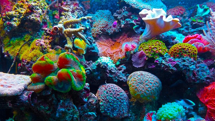 """Buenas noticias: los arrecifes de coral están """"resucitando"""" y comenzaron a crecer nuevamente"""