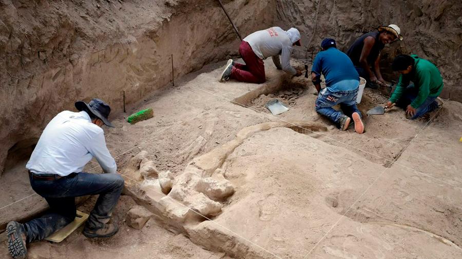 Hallan los restos de un mastodonte de hace más de 10,000 años en México