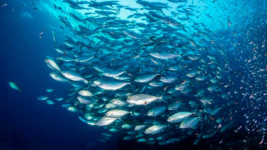 Uno de cada 5 pescados en México tiene microplásticos en su interior