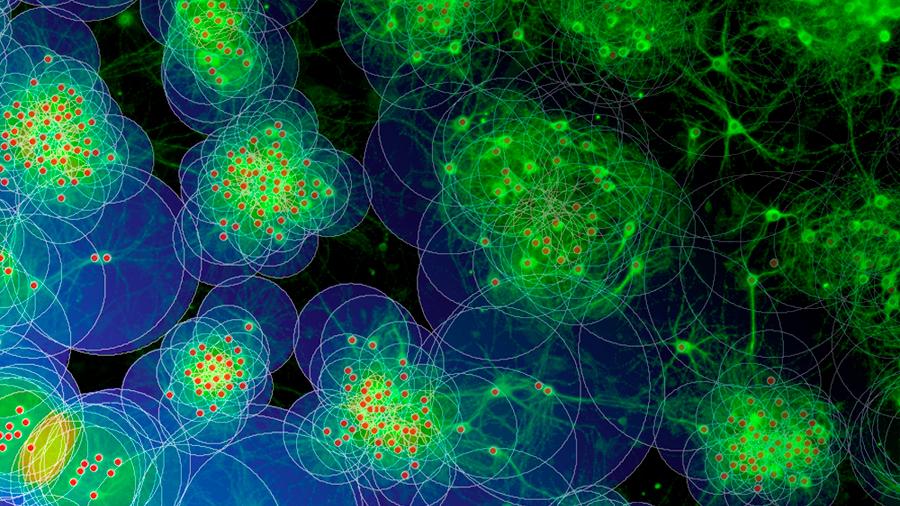 Descubren cómo se forman en el cerebro las redes neuronales