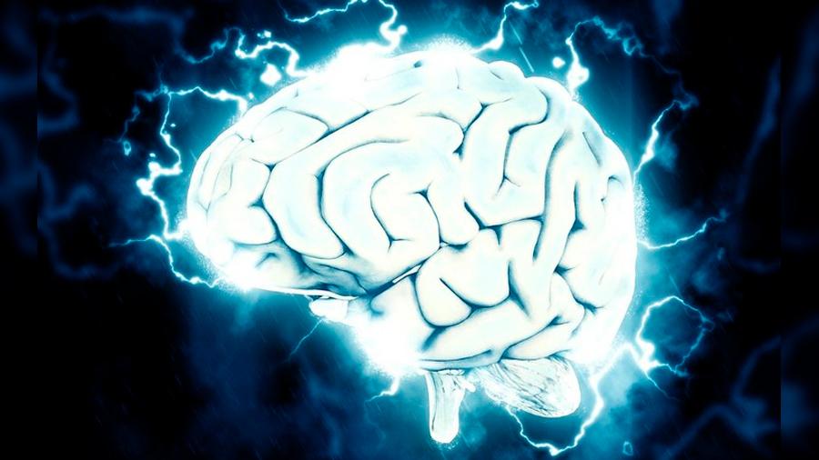 Descubren el funcionamiento del circuito cerebral responsable del aumento o la atenuación de signos de dolor