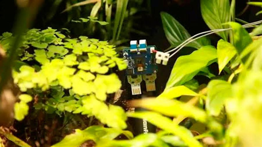 Primer 'selfie' hecho por una planta