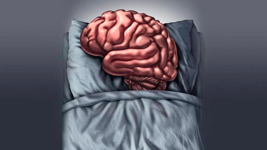 Un gen resetea el cerebro a las cuatro horas de dormir