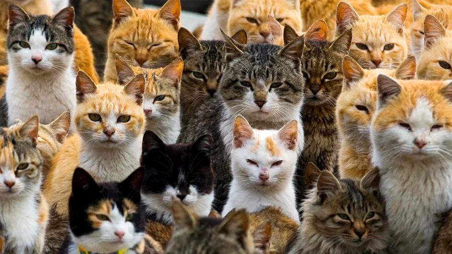 Tu gato podría quererte más de lo que crees, revela estudio