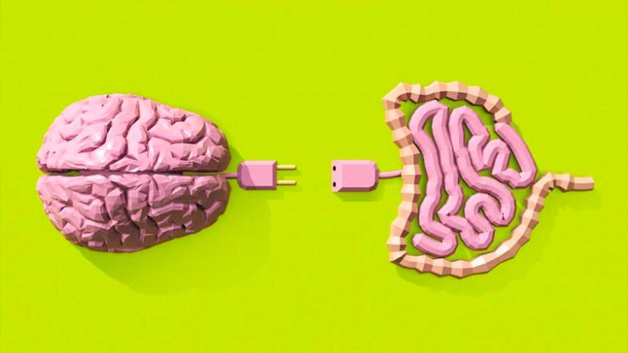 Primeras pistas de cómo la salud de los intestinos influye sobre la cerebral