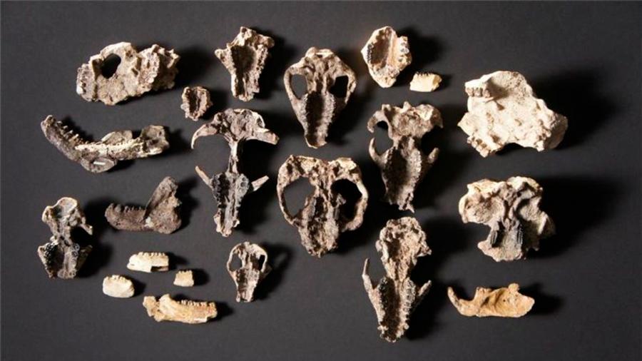 Descubren fósiles que muestran cómo se recuperó la vida tras la gran extinción
