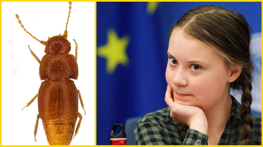 Greta Thunberg da nombre a un escarabajo recién descubierto