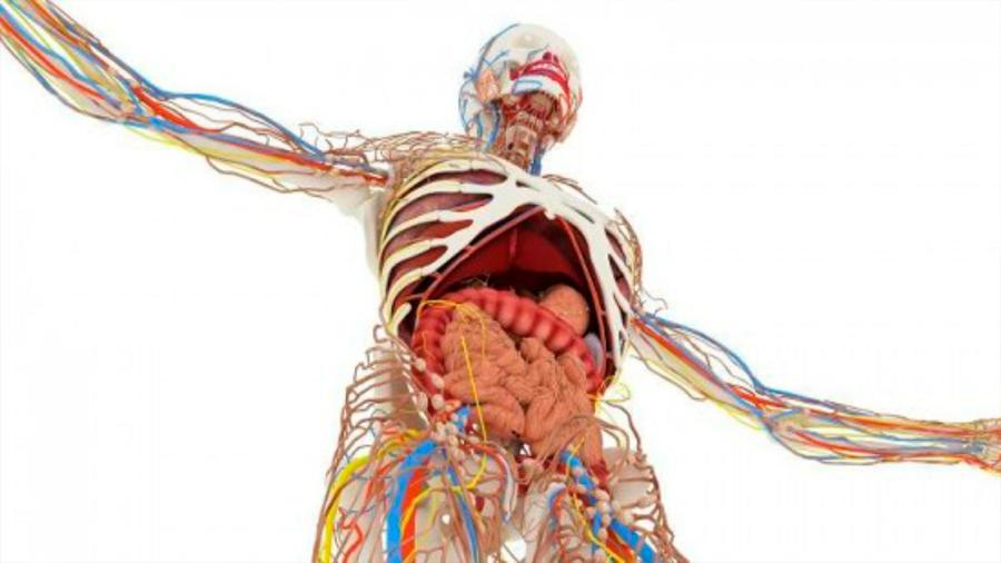 Cinco partes de nuestro cuerpo que hasta hace poco no sabíamos que teníamos