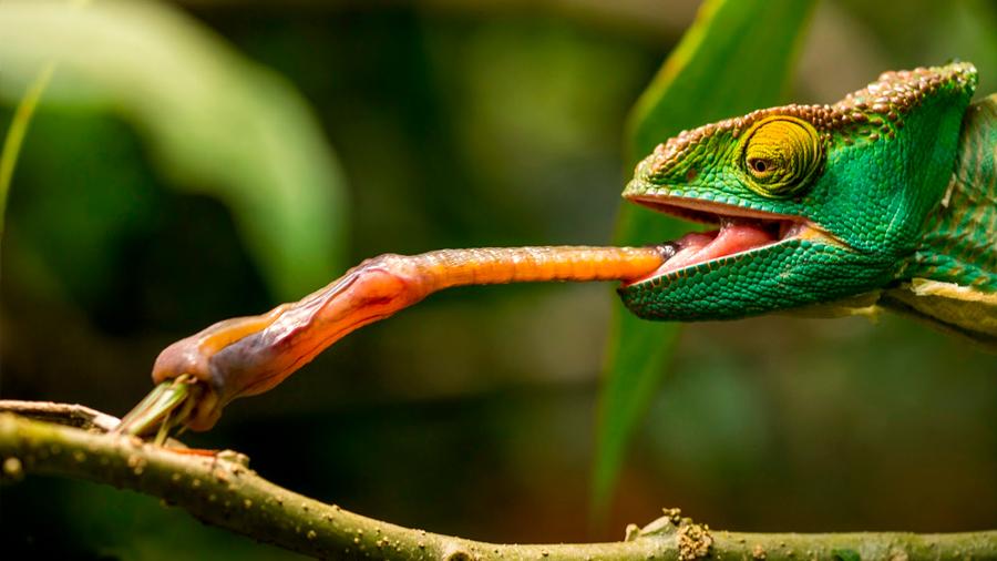 Nuevos robots blandos atrapan presas a la velocidad de camaleones