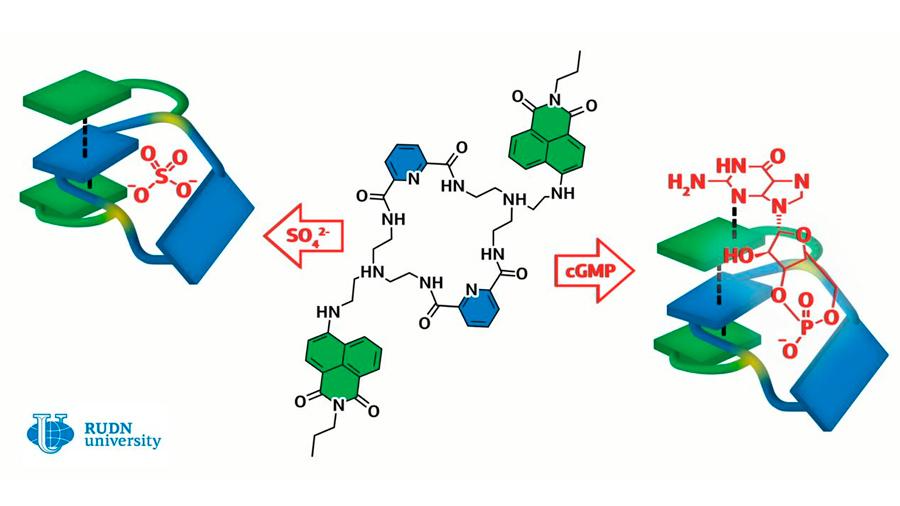 Crean una molécula que permite curar enfermedades cardiacas