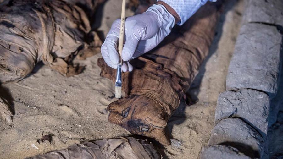 Momia de gato de 2,500 años asombró a los arqueólogos por lo que tiene en su interior