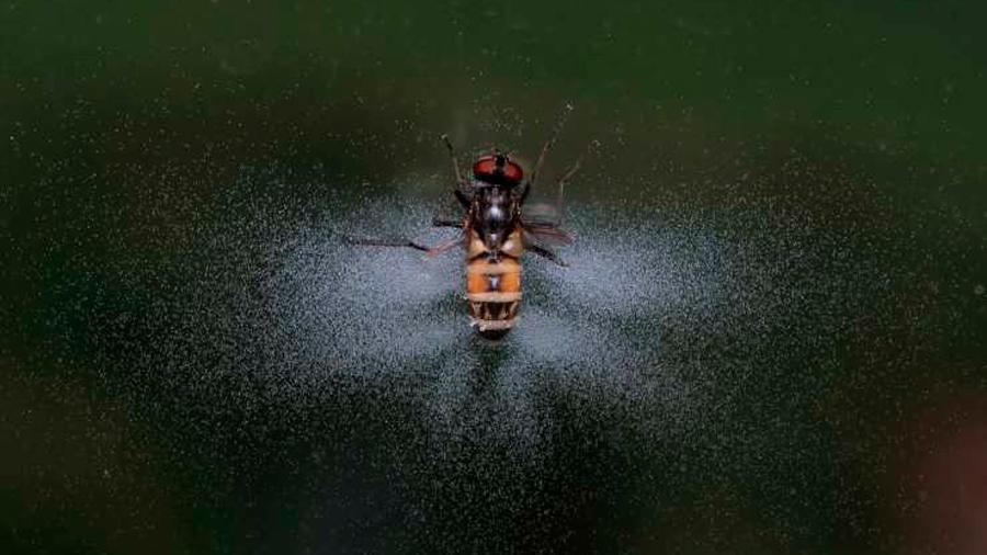 Hongo convierte a las moscas en zombies lanzadores de misiles