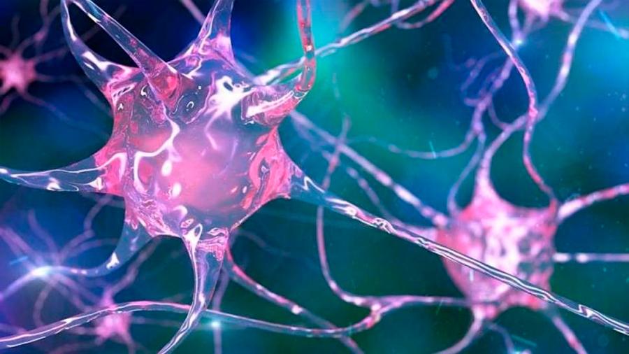 Logran captar cómo se ve la muerte de una neurona