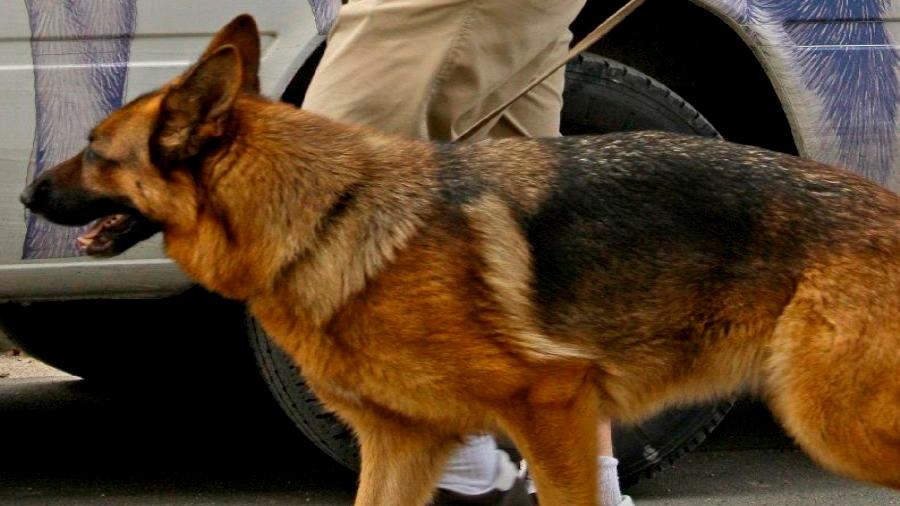Los perros podrían salvar a especies en peligro de extinción