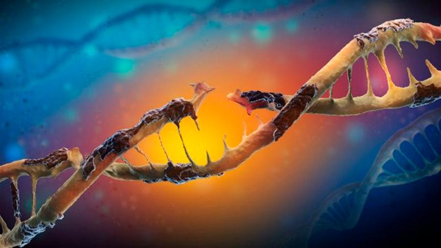 Descubren que algunos tipos de proteínas podrían estabilizar y reparar el daño del ADN
