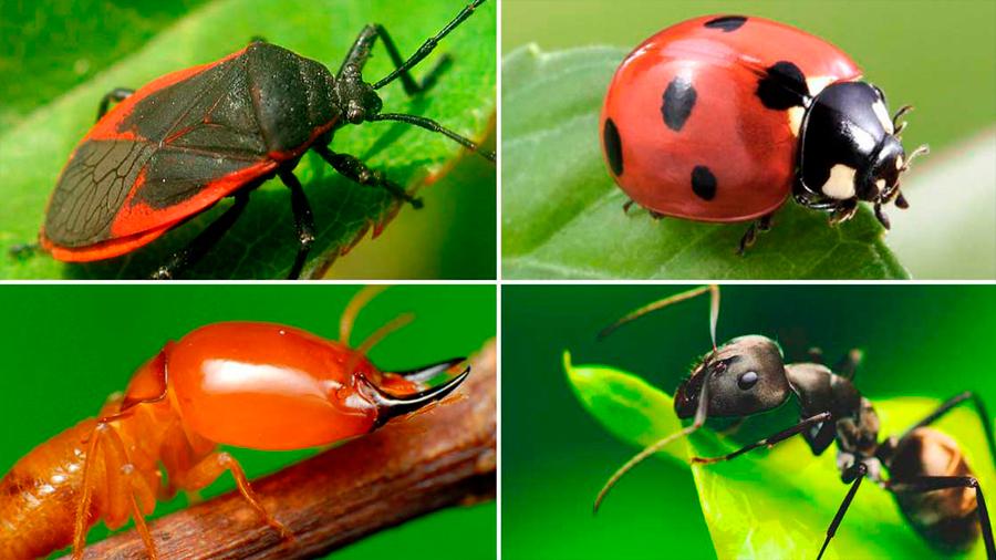 En 10 años desaparecieron hasta 67% de los insectos de Alemania y la agricultura parece ser la culpable