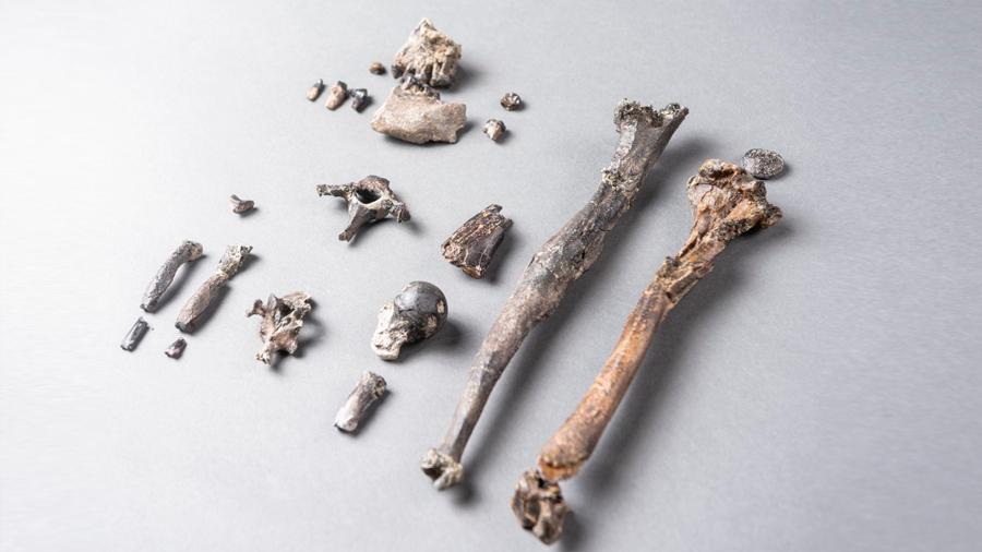 Fósiles del primer simio erguido revolucionan el origen del bipedismo