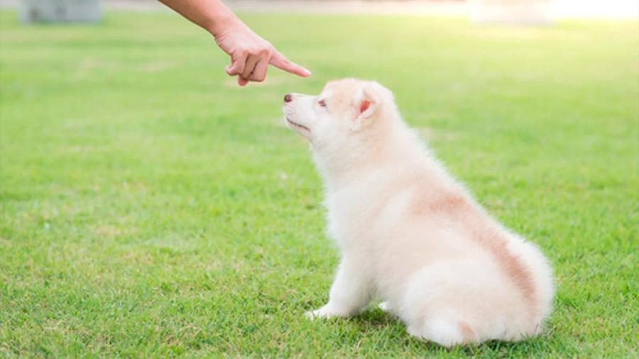 No eduques a tu perro a gritos, te lo dice la ciencia