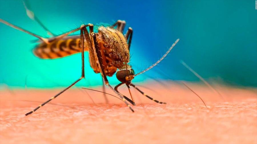 Diagnostican uno de los primeros casos de contagio de dengue por transmisión sexual en el mundo
