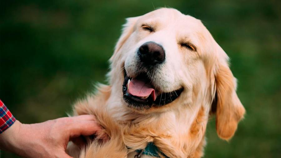 Esta es la mejor manera de calcular la edad de tu perro en años humanos, según la ciencia