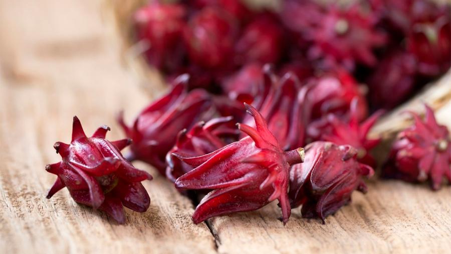 Investigador mexicano demuestra que flor de jamaica mata más bacterias que el cloro