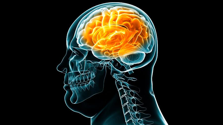 Científicos mexicanos revelan que obesidad podría formarse en el cerebro