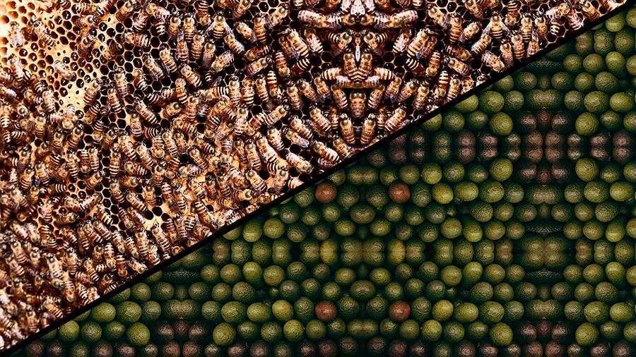 Nuestra obsesión por el aguacate es una amenaza para las abejas