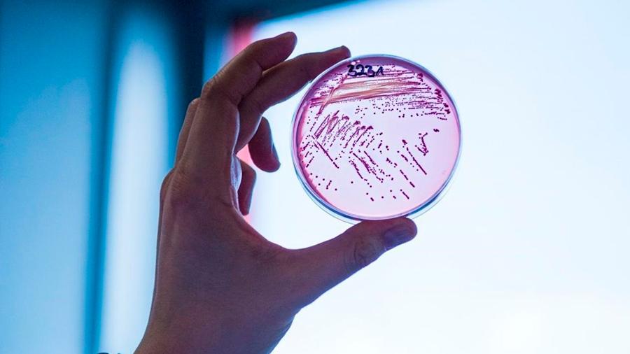 Descubren antibiótico con potencial de combatir bacterias hasta ahora resistentes a medicamentos