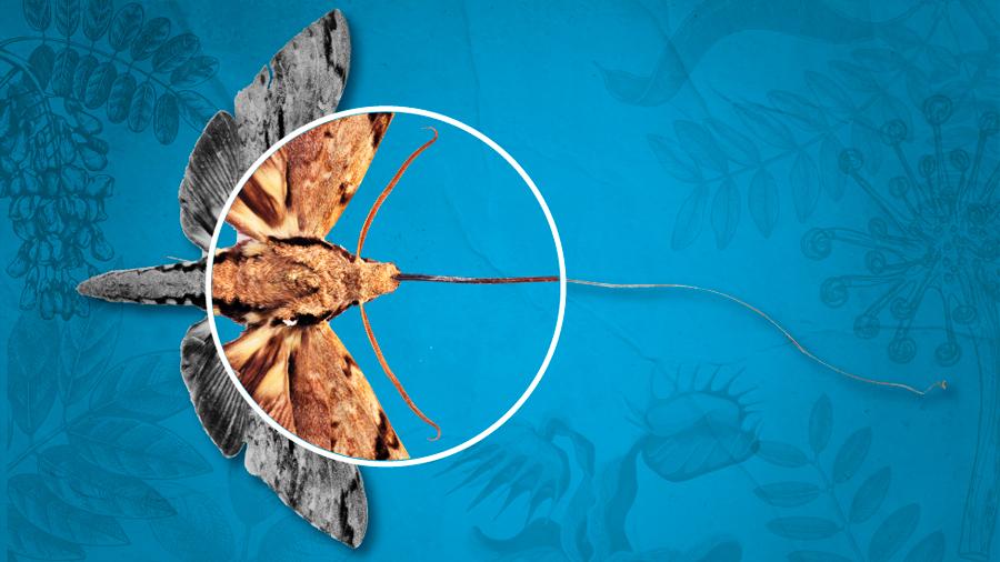5 experimentos de Darwin que puedes hacer en casa (y que demuestran su pasión sin límites por la naturaleza)