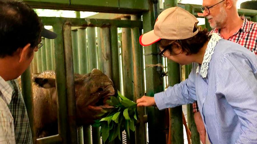 Muere el último rinoceronte de Sumatra en Malasia, le declaran extinto
