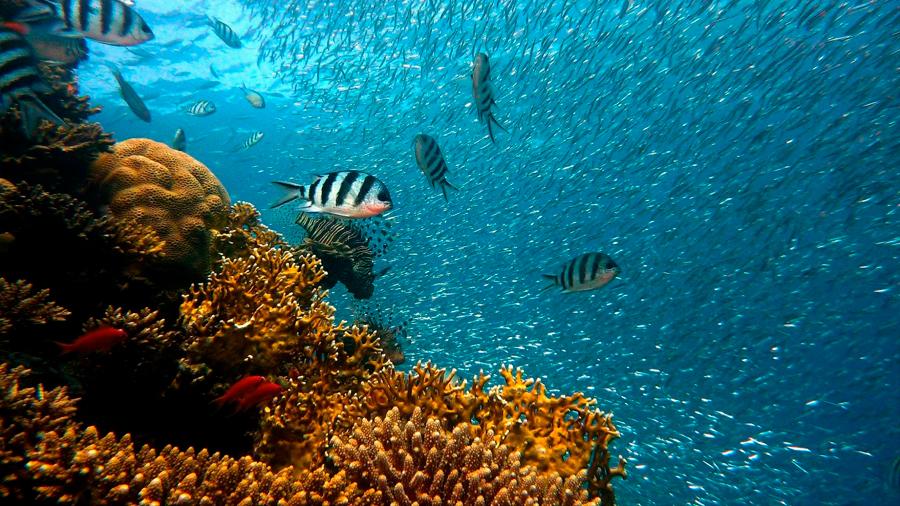 Los peces escapan al fondo del océano por el cambio climático
