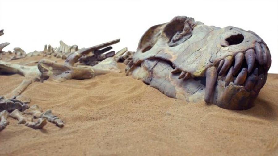 Ocho animales extintos que nunca más volveremos a ver (y uno que volvió de la muerte)