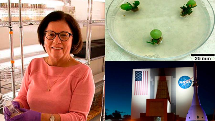Científica colombiana crea tomates tan pequeños que pueden ser cultivados en estaciones espaciales