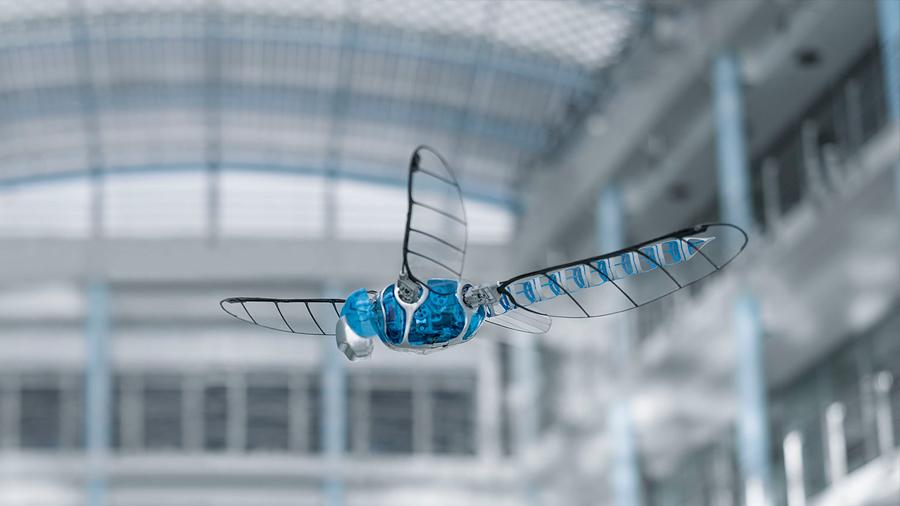 Conoce el insecto robot más grande del mundo, cuya envergadura es de 63 centímetros [VIDEO]
