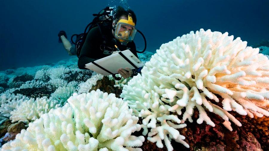 "Científicos lograron ""resucitar"" arrecifes de coral moribundos usando altavoces"