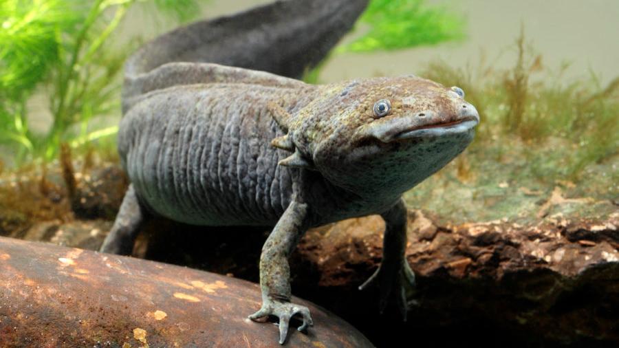 25 animales en peligro de extinción en México