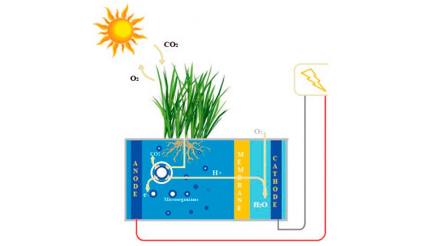 Cómo cosechar bioelectricidad de una planta