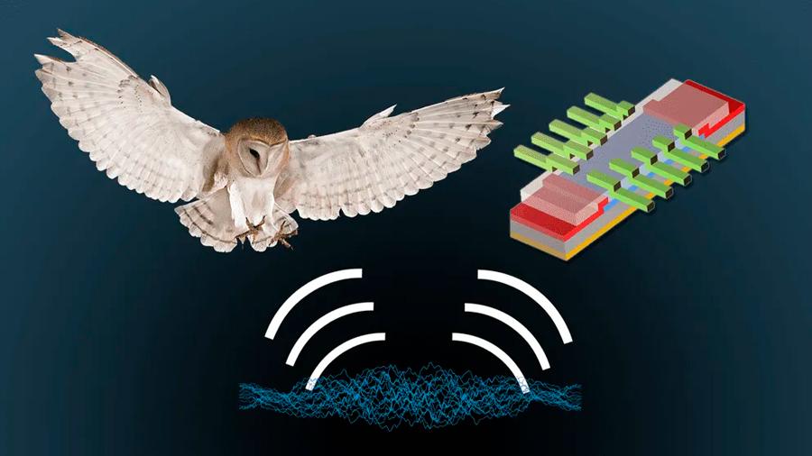 Un estudio del oído de lechuzas podría ayudar a mejorar la navegación en dispositivos electrónicos
