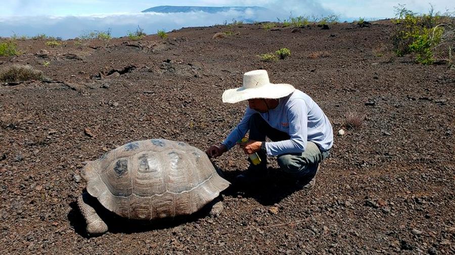 Galápagos tras huellas de tortugas que se creían extintas