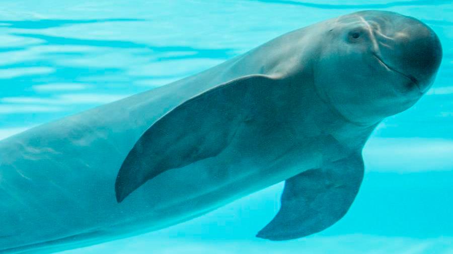 Advierten de la extinción de 13 especies de ballenas y delfines debido a las redes de pesca